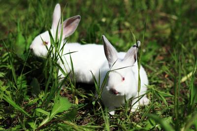 Россияне продолжают активно потреблять крольчатину