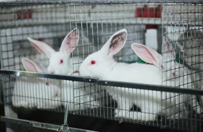 В России неуклонно увеличивается поголовье кроликов