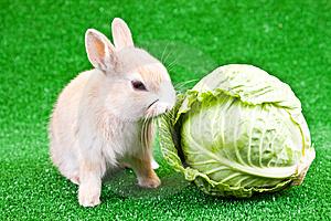 Единственная на всю Россию кроличья выставка «Братец кролик», на которой представлены животные